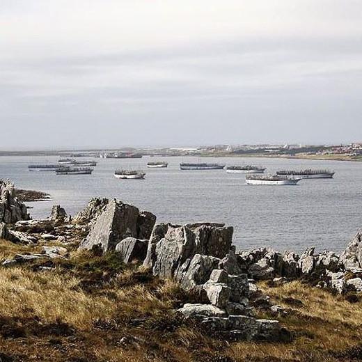 Islas Malvinas-Falklands y la zafra del calamar Illex