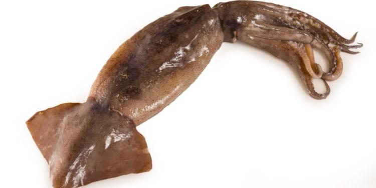 Los calamares de nuestros mares: el caso del Illex argentinus